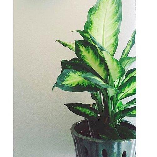 amazing-cok-renkli-yapraklariyla-botanik-havaya-evinizin-havasini-temizleyen-bitkiler-24 Evinizin havasını temizleyen bitkiler