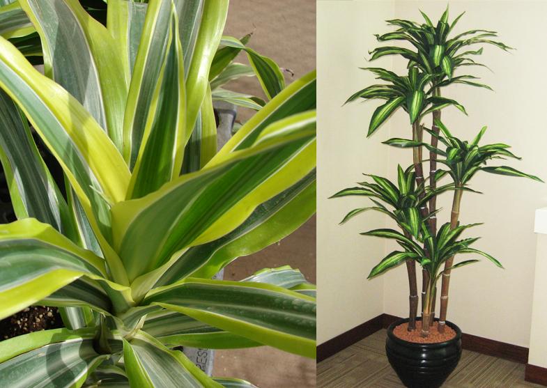 beautiful-evin-havasini-temizleyen-bitkiler-evinizin-havasini-temizleyen-bitkiler-23 Evinizin havasını temizleyen bitkiler