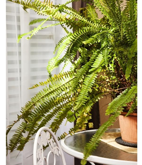 compact-nasa-acikladi-bu-bitkiler-evdeki-evinizin-havasini-temizleyen-bitkiler-12 Evinizin havasını temizleyen bitkiler