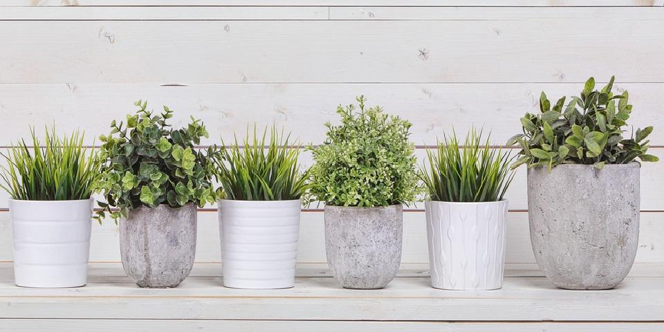 cute-evinizin-havasini-temizleyecek-12-ev-evinizin-havasini-temizleyen-bitkiler-8 Evinizin havasını temizleyen bitkiler