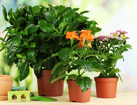 Amazing Evinizin Havasını Temizleyen Bitkiler Evinizin havasını temizleyen bitkiler