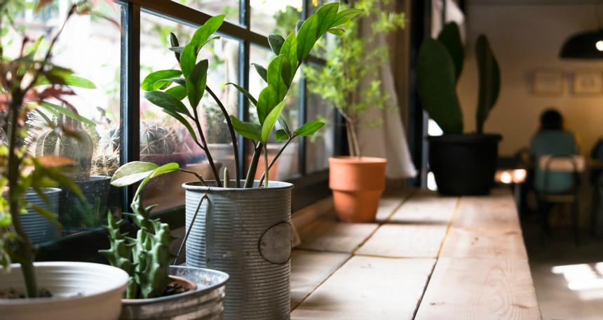 luxury-evinizde-soludugunuz-havayi-temizleyen-bitkiler-evinizin-havasini-temizleyen-bitkiler-7 Evinizin havasını temizleyen bitkiler