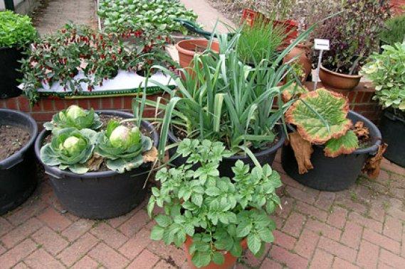 Bahçe-Tadında-Sebze Bahçe Tadında Sebze Yetiştirin