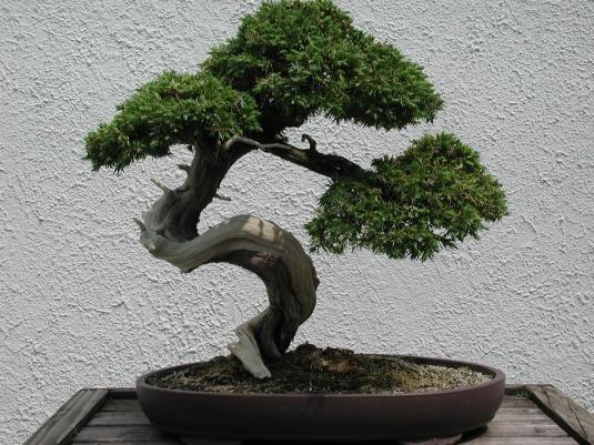 Dekoratif-Bonzai-Ağacı Bonsai Ağacı İle Dekorasyon