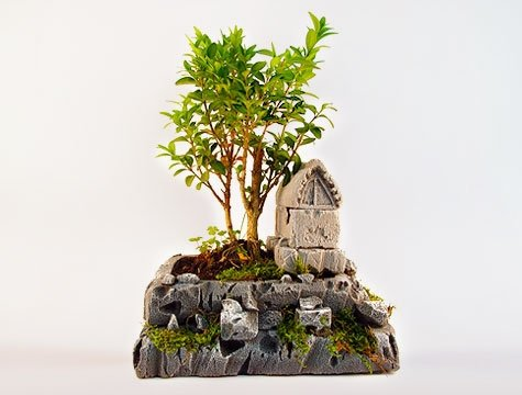 Dekoratif-Saksıda-Bonzai-Ağacı Bonsai Ağacı İle Dekorasyon