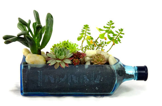 cam-siselerden-dekoratif-saksılı-cam-şişleri-değerlendirme-modeli-12 Dekoratif cam şişe nasıl yapılır?